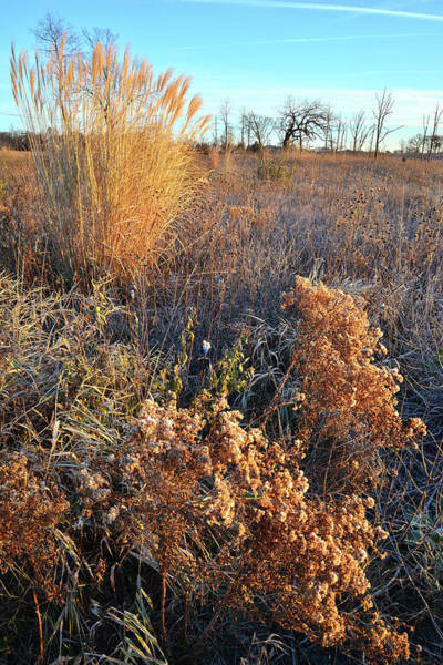 Photograph - Lakewood Prairie Grasses At Sunrise by Ray Mathis