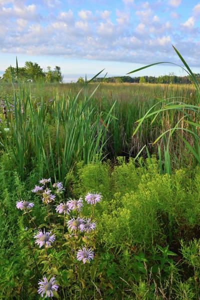 Photograph - Lakewood Wetland Scene by Ray Mathis