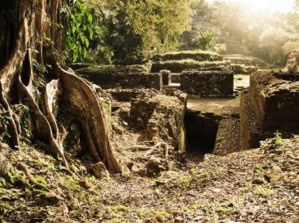 Photograph - Lamanai Mayan Ruins Of Belize by Tatiana Travelways