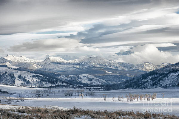 Wall Art - Photograph - Lamar Valley Afternoon by Sandra Bronstein