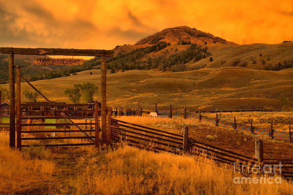 Photograph - Lamar Valley Bison Ranch Sunset by Adam Jewell