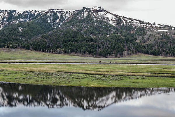 Wall Art - Photograph - Lamar Valley Reflections by Paul Freidlund