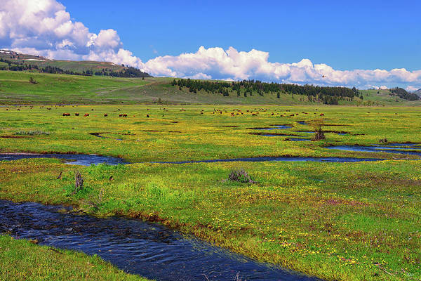 Photograph - Lamar Valley Spring by Greg Norrell