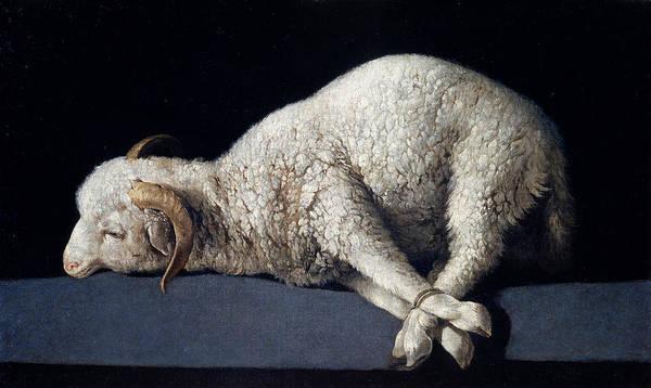 Lamb Of God Wall Art - Painting - Lamb Of God. Agnus Dei by Francisco de Zurbaran
