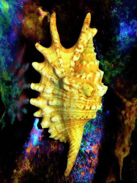 Photograph - Lambis Digitata Seashell by Frank Wilson