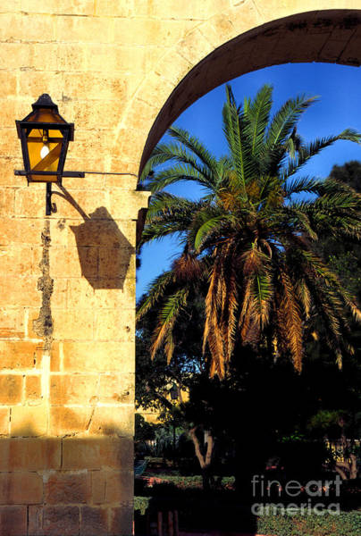 Photograph - Lamp And Palm Upper Barracca Gardens by Thomas R Fletcher