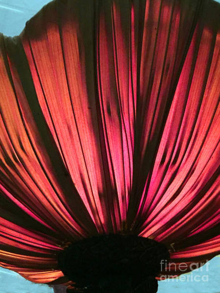 Photograph - Lamp Shade Blossom by Rick Locke