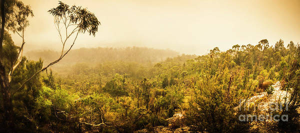 Forestry Photograph - Land Before Time by Jorgo Photography - Wall Art Gallery