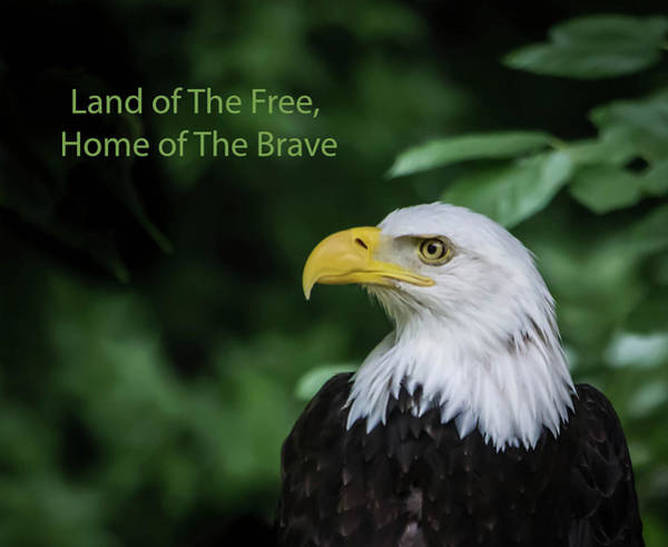 Wall Art - Photograph - Land Of The Free by Linda Eszenyi