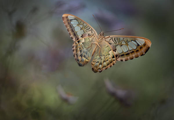 Heather Wall Art - Photograph - Landing 2 by Heather Bonadio