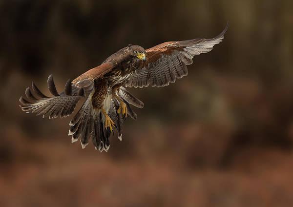 Photograph - Landing Approach by Bruce Bonnett