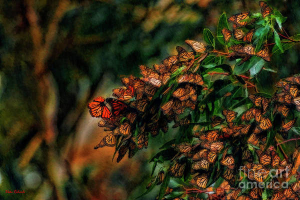 Photograph - Landing At The Monarch Grove Sanctuary by Blake Richards