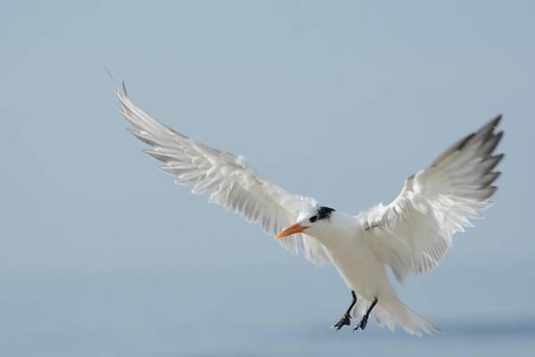 Photograph - Landing by Fraida Gutovich
