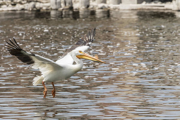 Photograph - Landing Gear Down by Thomas Young