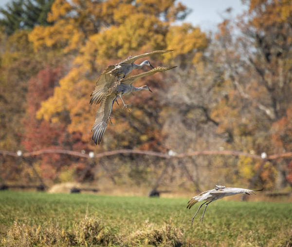 Photograph - Landing Into Fall by Thomas Young