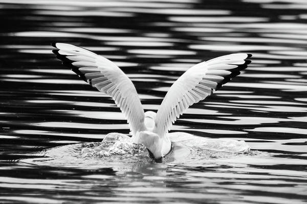 Photograph - Landing by Wendy Cooper