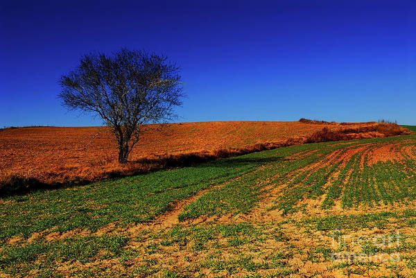 Cultivation Digital Art - Landscape. by Carlos Perez Muley