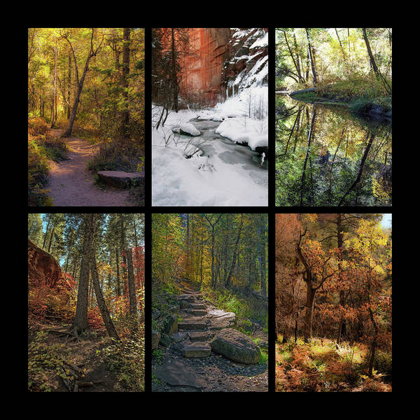 Photograph - Landscape Fall Color Collage 1 by Tam Ryan