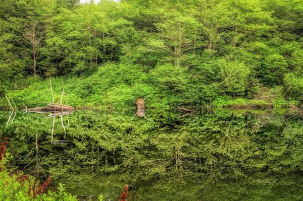 Photograph - Landscape Pond by Bill Posner