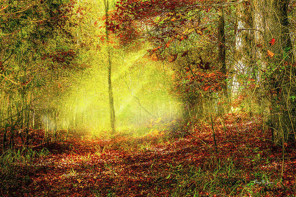 Photograph - Landscape - Sunbeams - Woodland Trail by Barry Jones