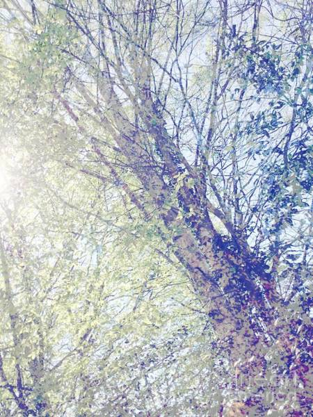 Photograph - Landscape Tree Art Digital Collage Spring Sun Silver Birch by Itsonlythemoon