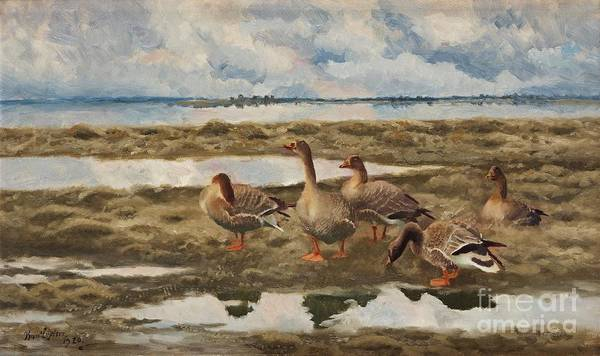 Goose Drawing - Landscape With Geese by Celestial Images