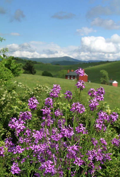 Photograph - Landscape With Purple Flowers by Emanuel Tanjala
