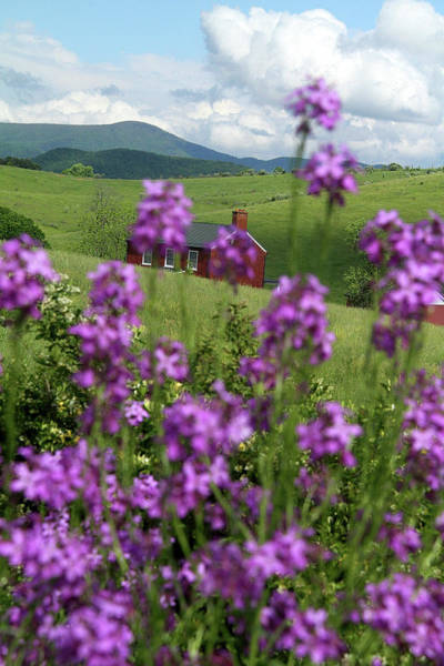 Photograph - Landscape With Purple Flowers In Virginia by Emanuel Tanjala