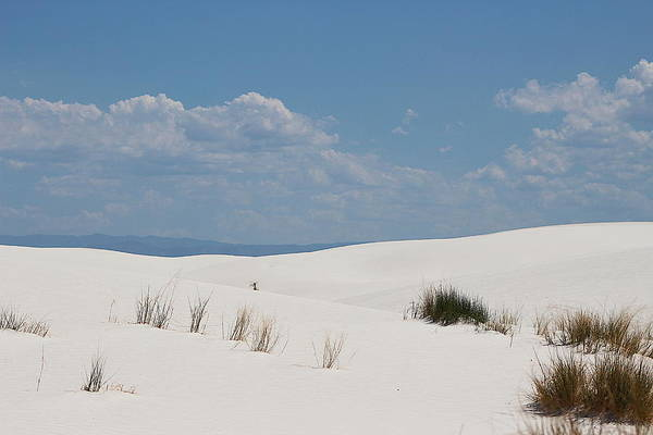 Photograph - Landscapes Of White Sands 10 by Colleen Cornelius