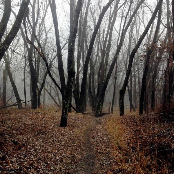 Photograph - Langdon Woods Shroud by Wayne King