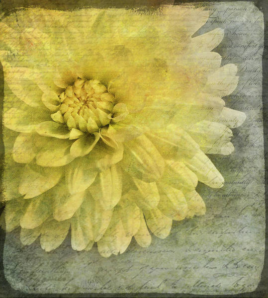 Photograph - Language Of Flowers by Jill Love