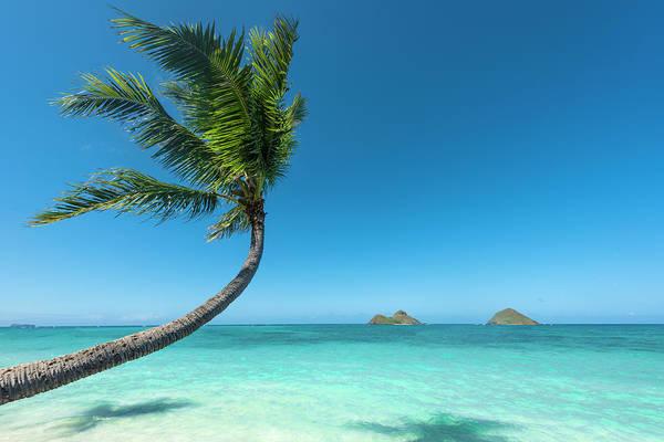 Palm Trees Photograph - Lanikai Hawaii by Leonardo Dale