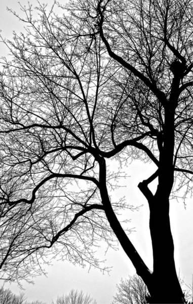 Photograph - Lansdown Trees by Mario MJ Perron
