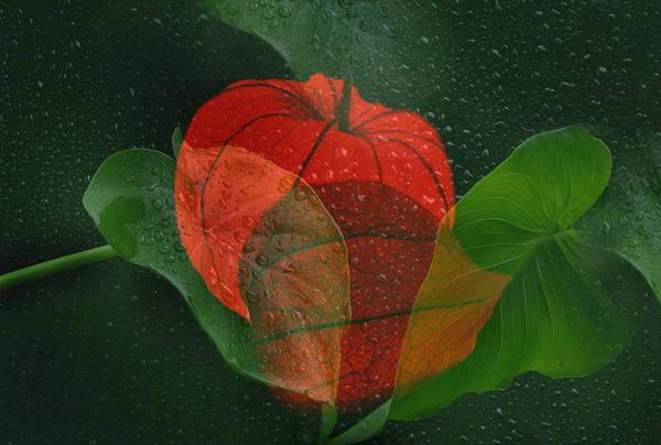 Blume Photograph - Lantern Flower by Manfred Lutzius