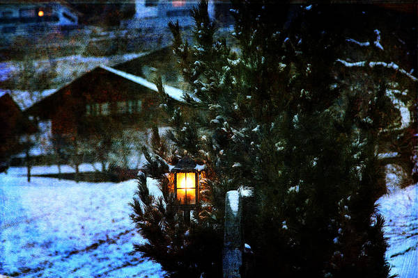 Photograph - Lantern In The Woods by Vittorio Chiampan
