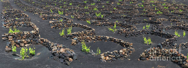 Wall Art - Photograph - Lanzarote Vineyards by Delphimages Photo Creations