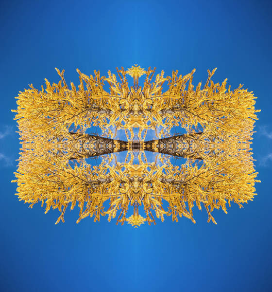 Kaleidoscopes Photograph - Larch Kaleidoscope 2 by Pelo Blanco Photo