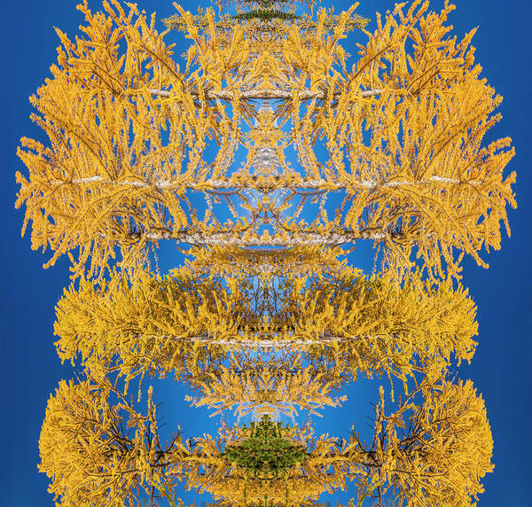 Kaleidoscopes Photograph - Larch Kaleidoscope by Pelo Blanco Photo