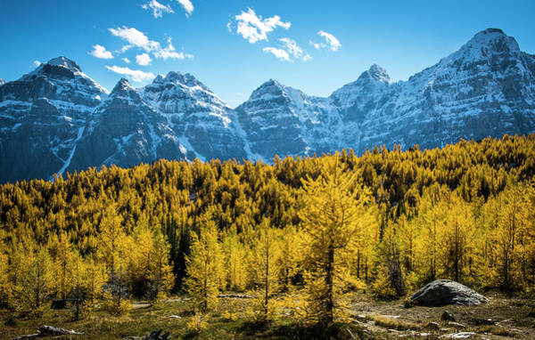 Photograph - Larch Trees In Lake Louise by Laura Szanto