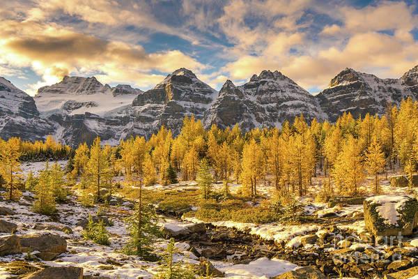 Lake Louise Wall Art - Photograph - Larch Valley Golden Larches Landscape by Mike Reid