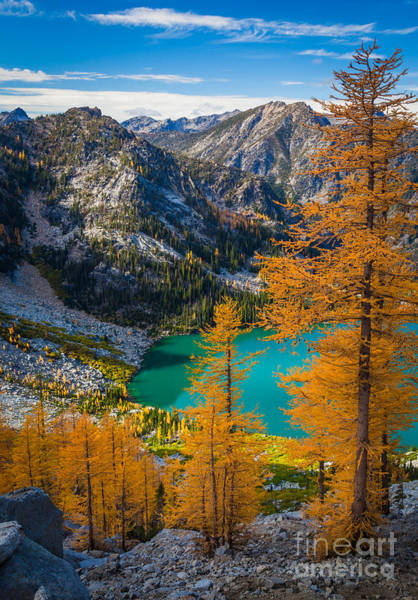 Alpine Lakes Wilderness Photograph - Larches At Colchuck by Inge Johnsson
