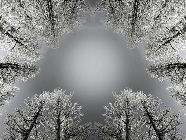 Evergreens Photograph - Larches Reflection Black And White by Pelo Blanco Photo