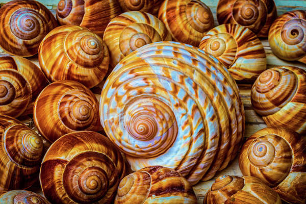 Wall Art - Photograph - Large And Small Snail Shells by Garry Gay