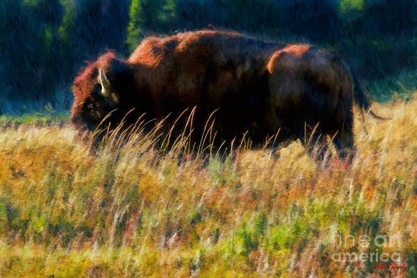 Photograph - Large Bison by Blake Richards