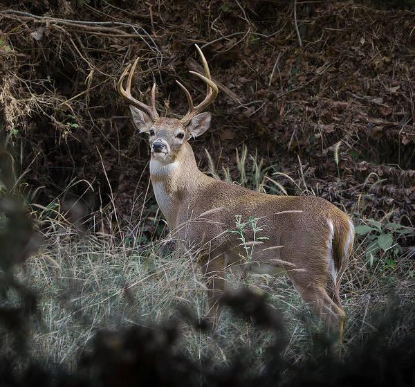 Photograph - Large Buck by John Johnson