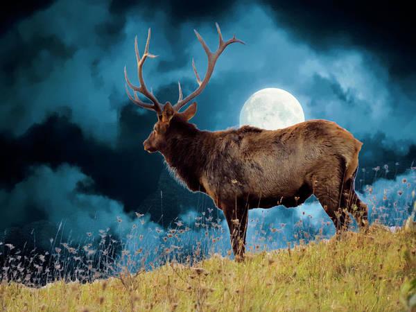 Digital Art - Large Bull Elk On Moonlite Hilltop. by Rusty R Smith