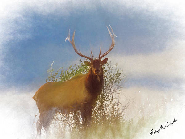 Digital Art - Large Bull Elk Standing In Foggy Light. by Rusty R Smith