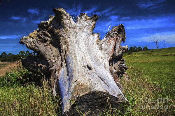 Wall Art - Photograph - Large Dead Tree Trunk by Sheila Smart Fine Art Photography