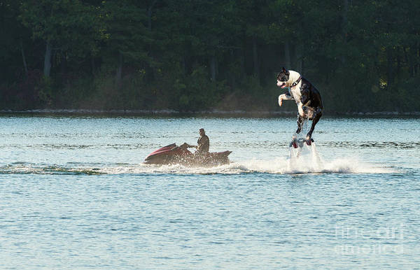 Digital Art - Large Dog On A Water Jet Pack by Les Palenik