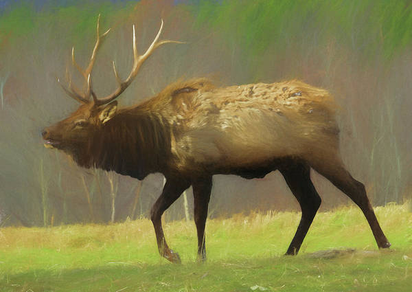 Photograph - Large Pennsylvania Bull Elk. by Rusty R Smith